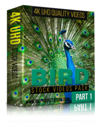 Bird 4K UHD Stock Video Footage Pack 1