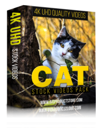 Cat 4K UHD Stock Videos