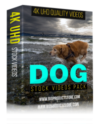 Dog 4K UHD Stock Videos