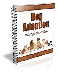Dog Adoption ( Newsletter )