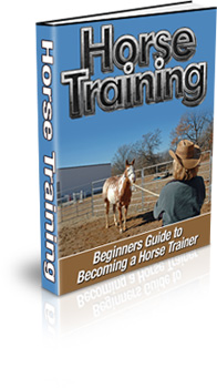 The Horse Racing Betting System